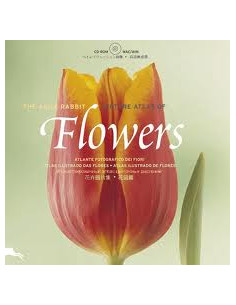Flowers + CD